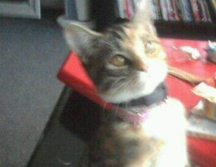 Puck de in-opleiding-tot-signaalkat-kat